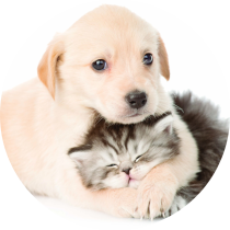 farmacie-crotone-veterinaria